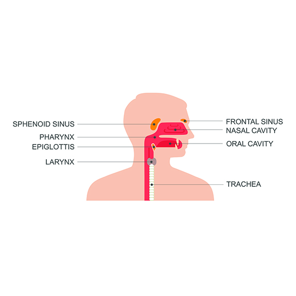 Ear Nose And Throat Services Meadville Pa Meadville Ent